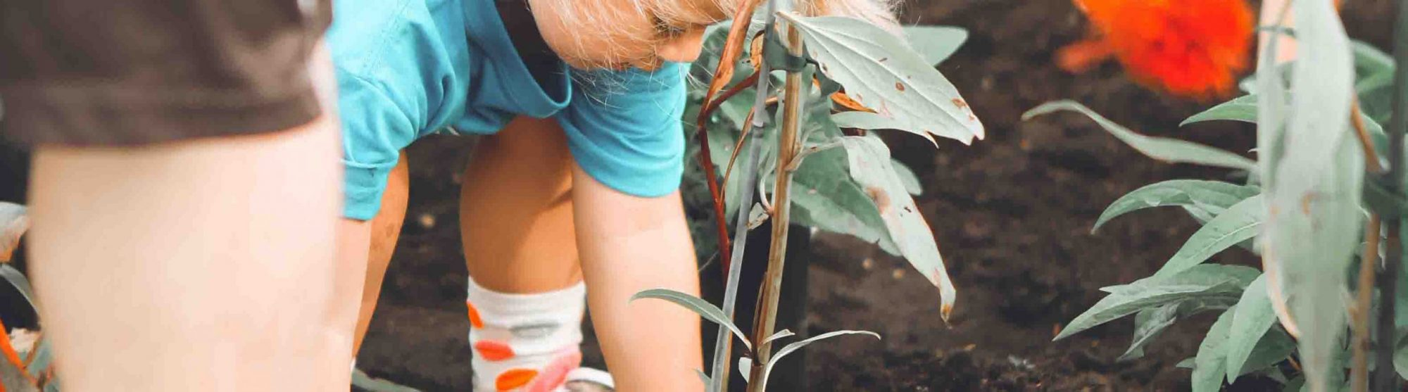 child planting a flower