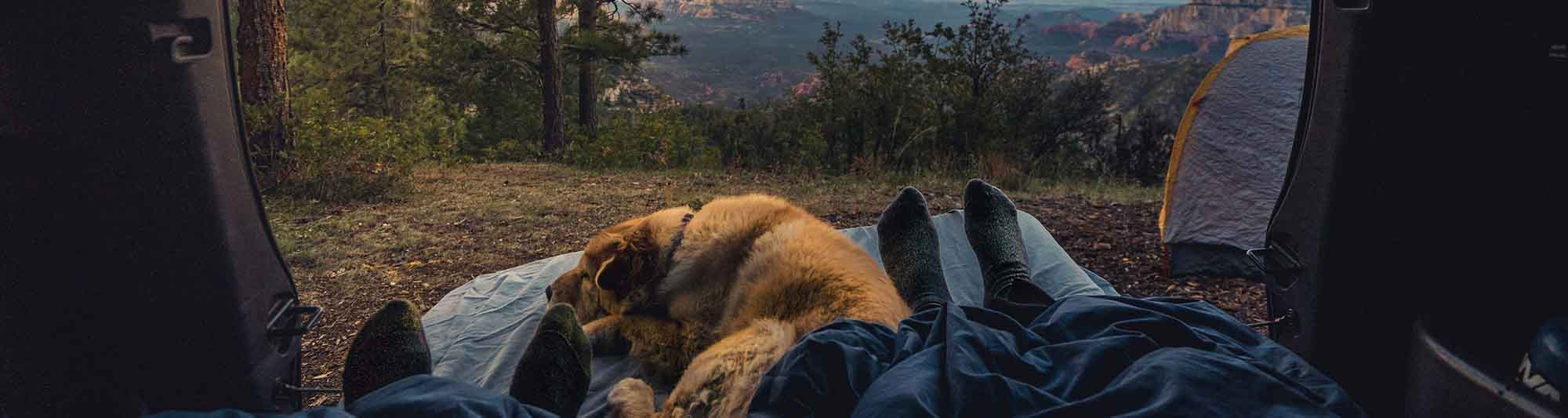 camping with a dog in the mountains